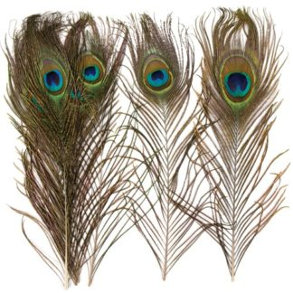 Peacock Craft Feathers - 10 Large Decorative & Natural Feathers. Size 26cm.