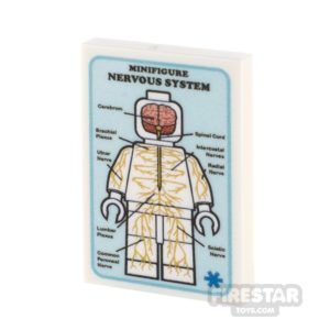 Product shot Custom Printed Tile 2x3 Medical Poster Nervous System