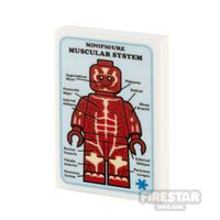 Product shot Custom Printed Tile 2x3 Medical Poster Muscular System
